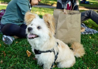 Buddy in the Park-small